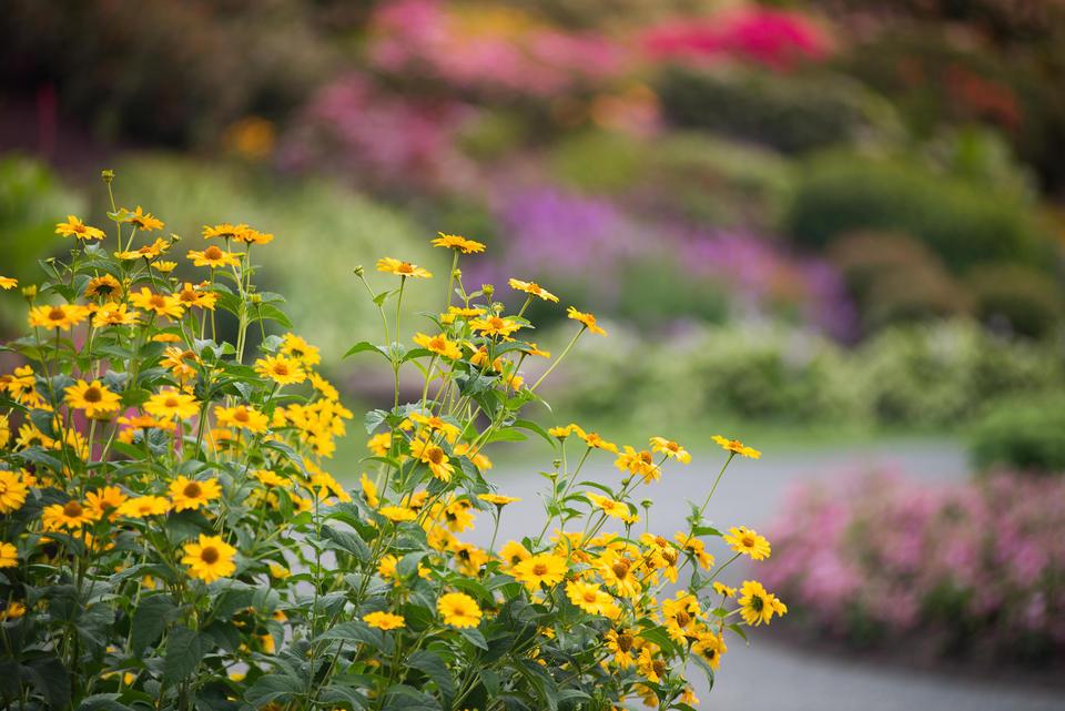 Parc Botanique A Fleur D Eau Jardins Et Parcs Tourisme Abitibi