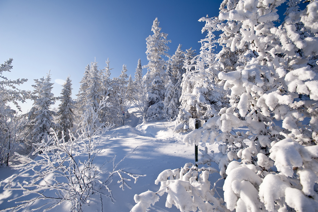 Image result for hiver